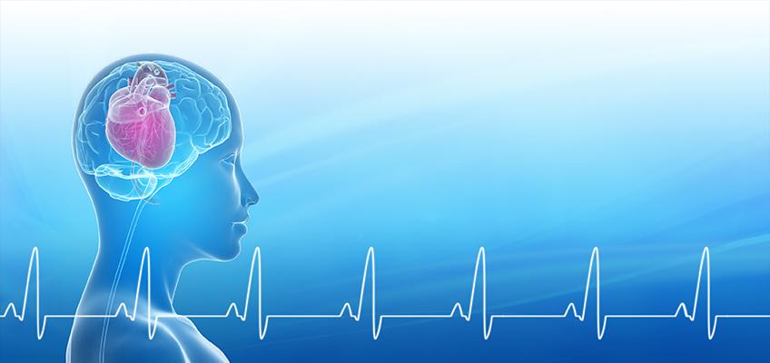 HMI-Blog-Heart-Brain-Interactions