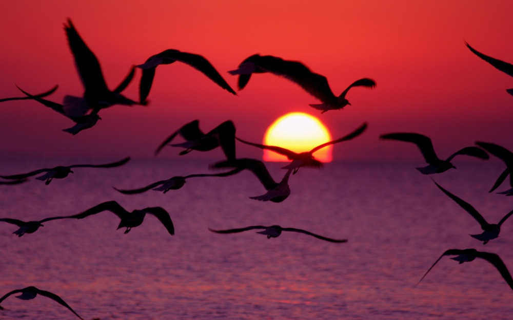 sunrise-with-flying-birds