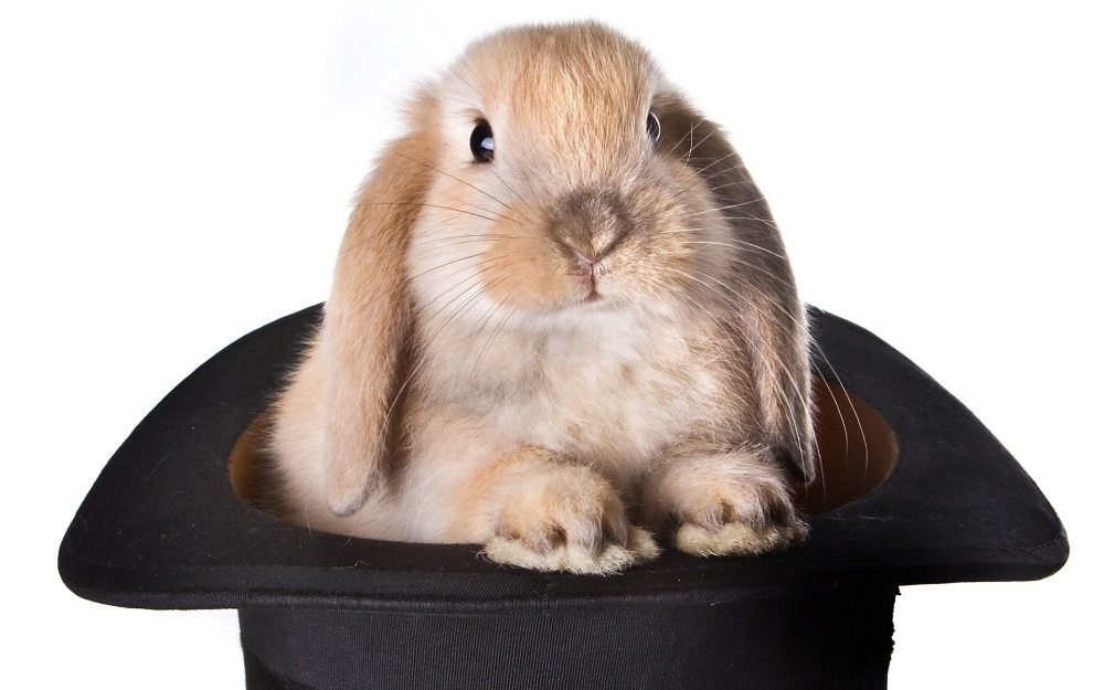 bunny-in-hat