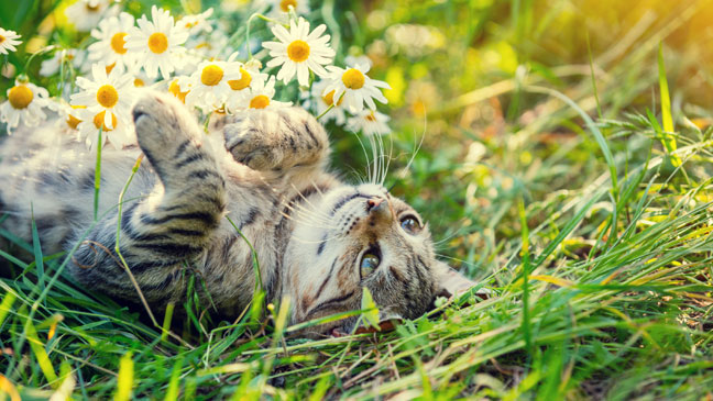 cats-in-the-garden-136420973187502601-170906120407
