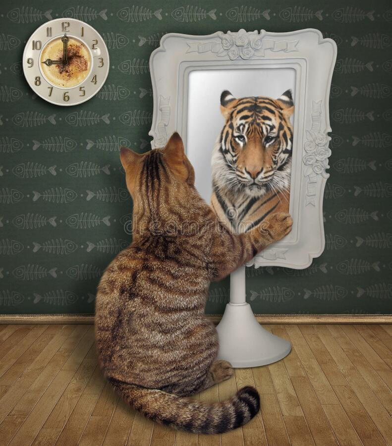 beige-cat-stares-his-funny-reflection-square-mirror-home-tiger-cat-stares-its-funny-reflection-171758502