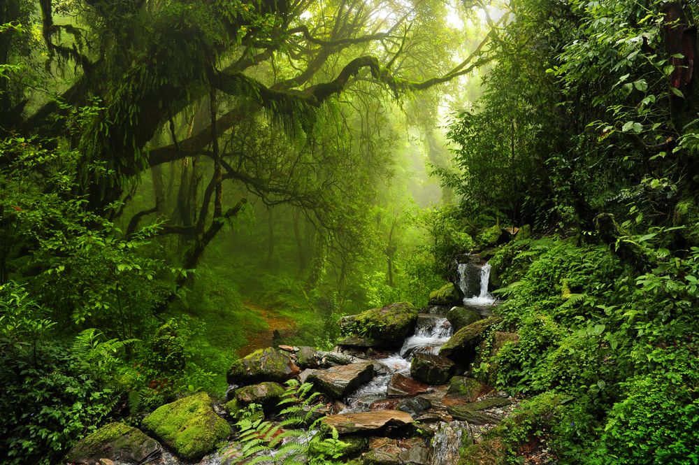 forest-with-waterfall