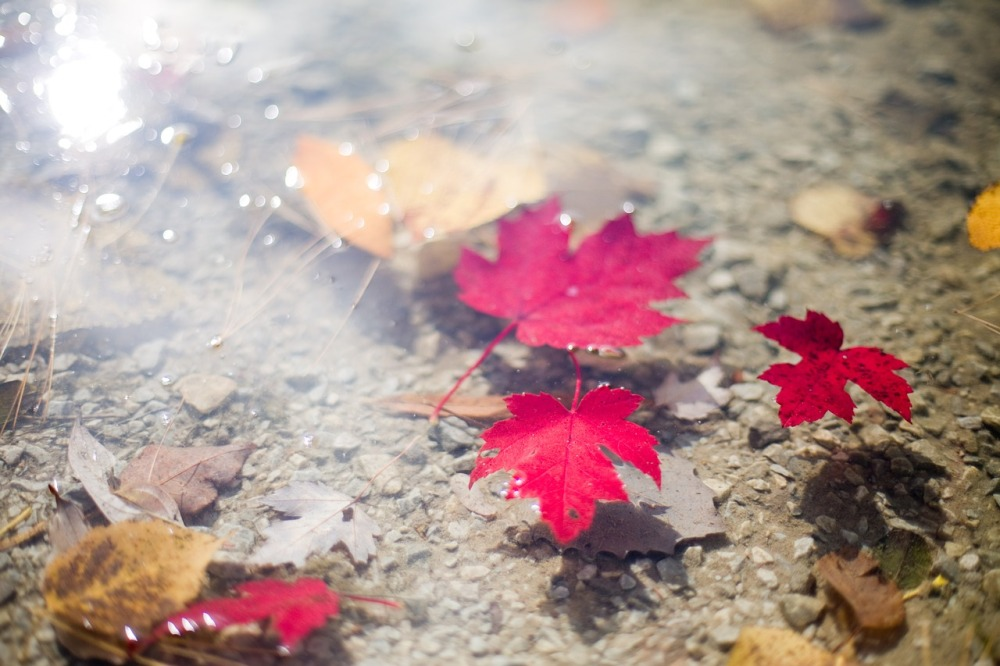 leaves-554140_1280