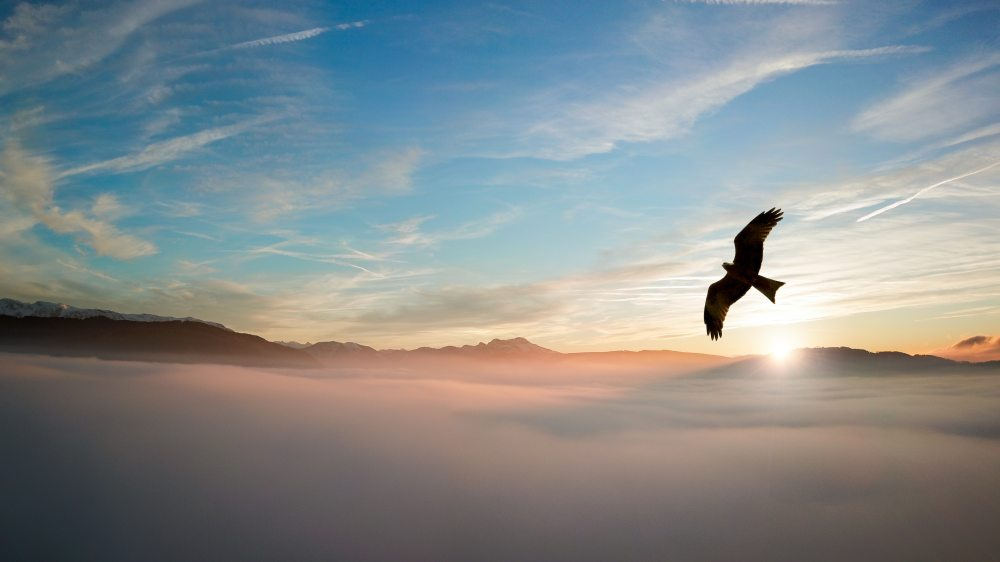 silhouette-of-bird-above-clouds-755385