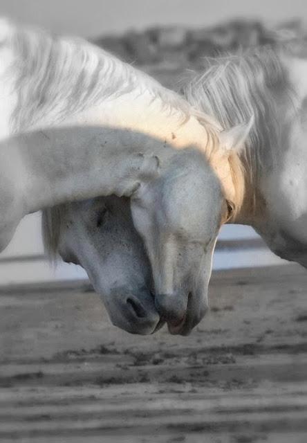 horsesaristela